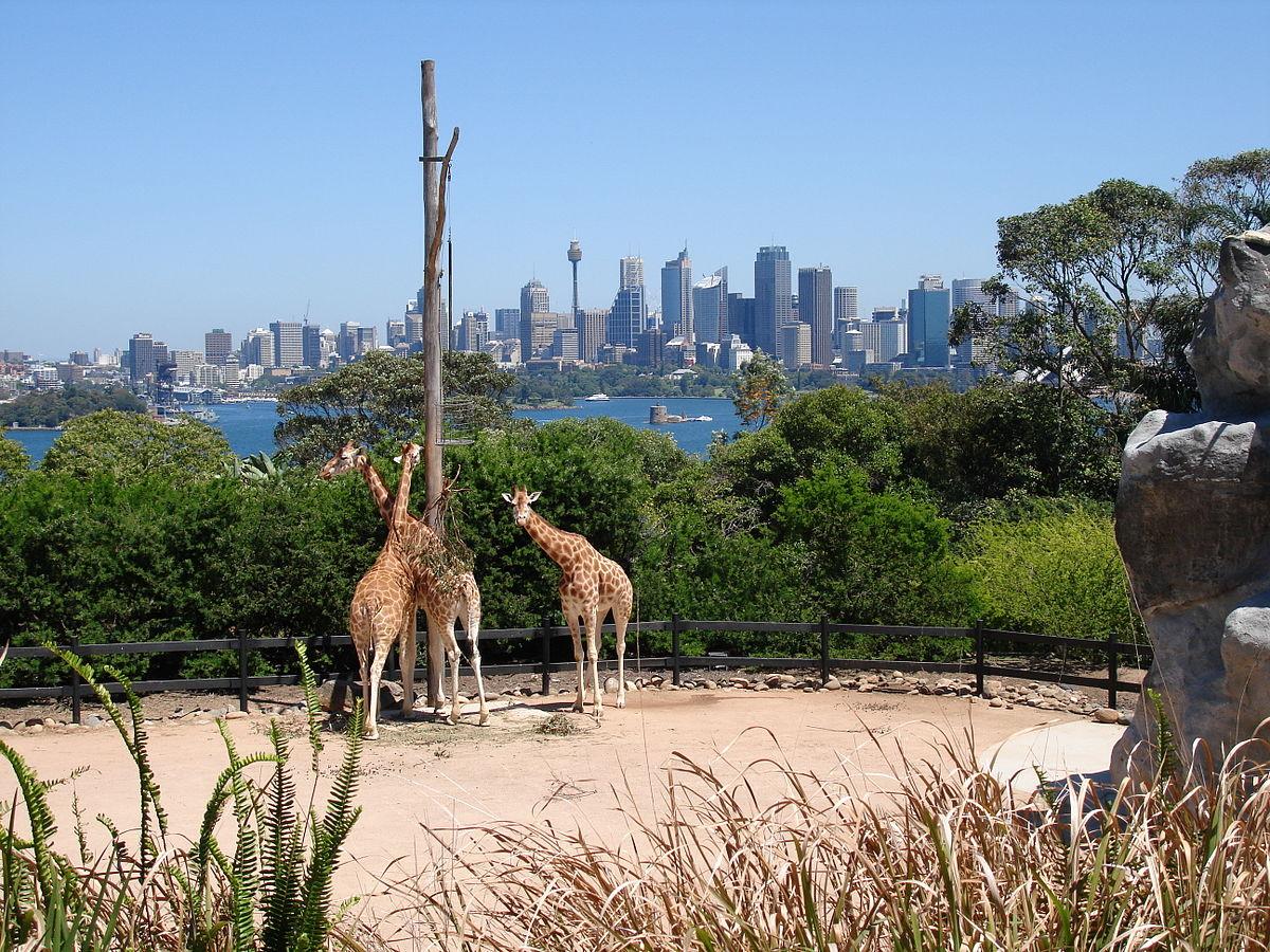 1200px-Zoo_Taronga_de_Sydney